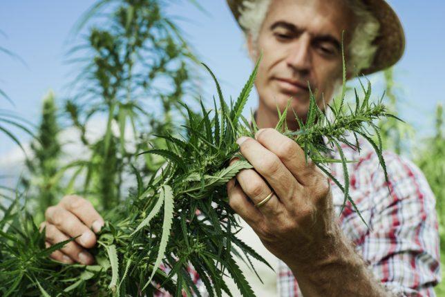 Vendita di cannabis